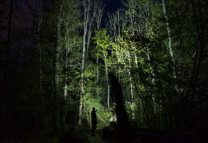 A man stands in the woods in the dark. His flashlight illuminates the trees in front of him.